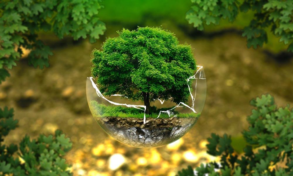 Environment Management